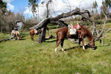 37-Rancho-el-chalan-CUSCO-PERU-photo-gallery
